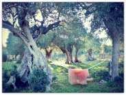 olivi giardino 1