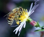 BeeFriendly! Course to discover the importance of bees…