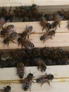api da vicino